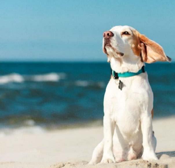 Φωτογραφίες σκύλων που απολαμβάνουν το καλοκαίρι τους (11)