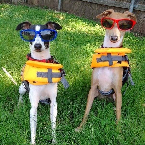 Φωτογραφίες σκύλων που απολαμβάνουν το καλοκαίρι τους (12)