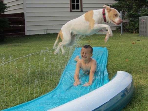 Φωτογραφίες σκύλων που απολαμβάνουν το καλοκαίρι τους (13)