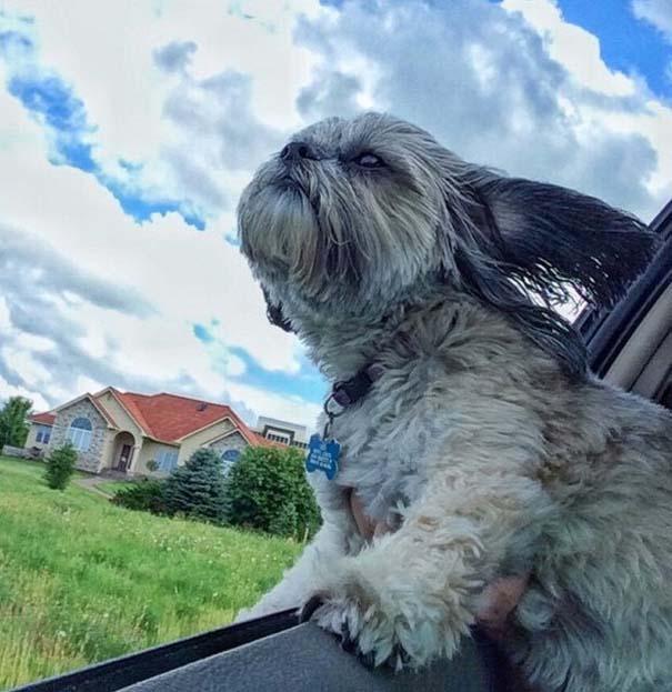 Φωτογραφίες σκύλων που απολαμβάνουν το καλοκαίρι τους (15)