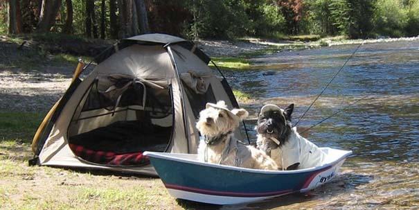 Φωτογραφίες σκύλων που απολαμβάνουν το καλοκαίρι τους (16)