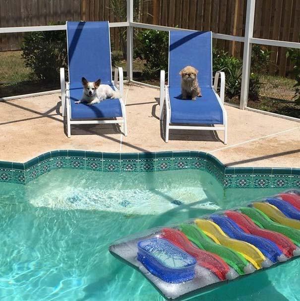Φωτογραφίες σκύλων που απολαμβάνουν το καλοκαίρι τους (18)