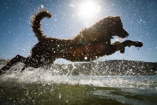 Φωτογραφίες σκύλων που απολαμβάνουν το καλοκαίρι τους (19)