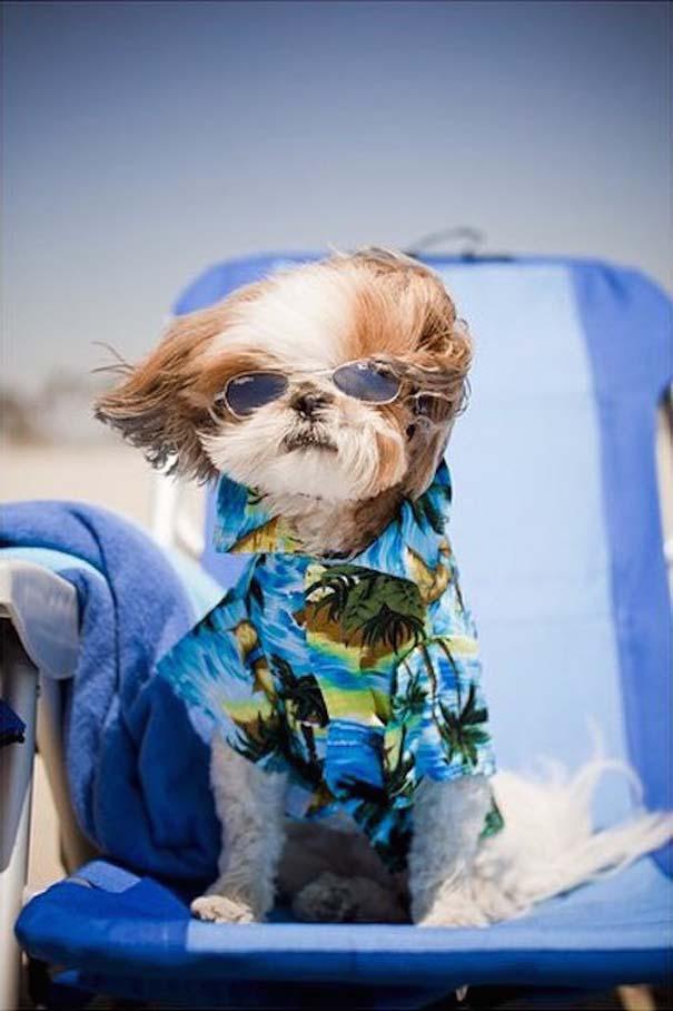Φωτογραφίες σκύλων που απολαμβάνουν το καλοκαίρι τους (21)