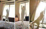 Αυτή η γάτα είναι γεννημένη μπαλαρίνα