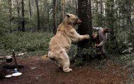 Κατοικίδια αρκούδα συμμετέχει στην οικογενειακή φωτογράφιση (3)