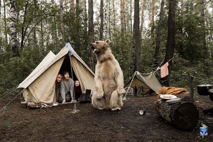 Κατοικίδια αρκούδα συμμετέχει στην οικογενειακή φωτογράφιση (5)
