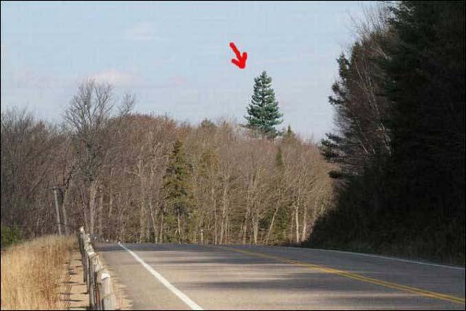 Νομίζετε πως πρόκειται για ένα δένδρο; Κοιτάξτε πιο προσεκτικά... (1)