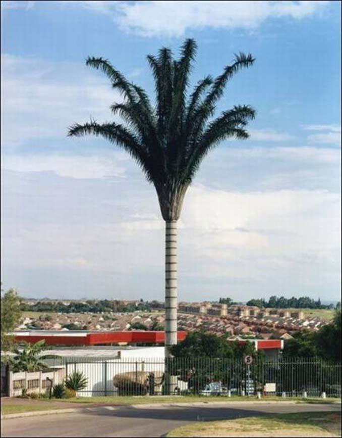 Νομίζετε πως πρόκειται για ένα δένδρο; Κοιτάξτε πιο προσεκτικά... (4)