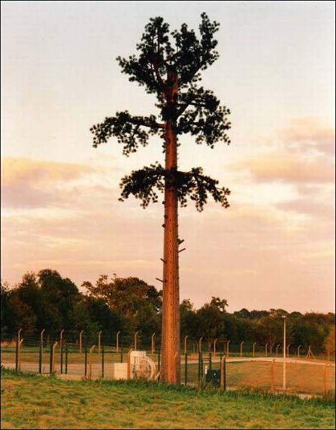 Νομίζετε πως πρόκειται για ένα δένδρο; Κοιτάξτε πιο προσεκτικά... (7)