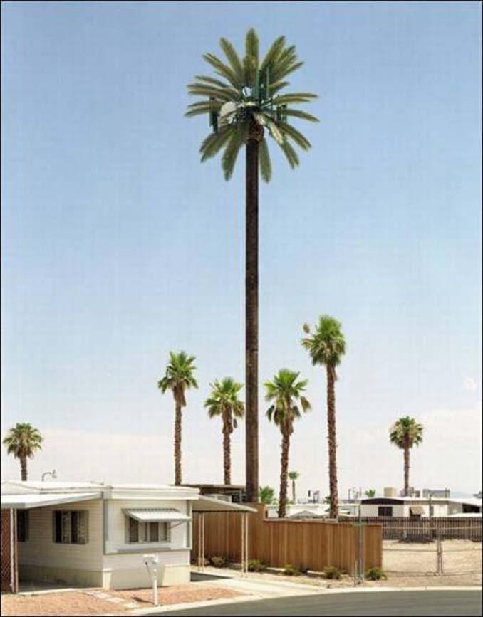 Νομίζετε πως πρόκειται για ένα δένδρο; Κοιτάξτε πιο προσεκτικά... (9)