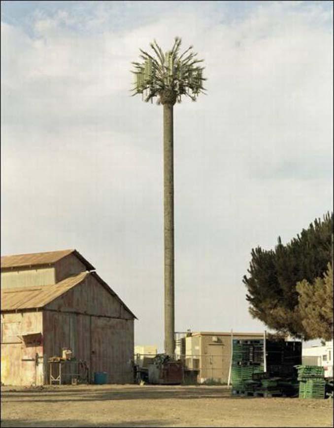 Νομίζετε πως πρόκειται για ένα δένδρο; Κοιτάξτε πιο προσεκτικά... (10)