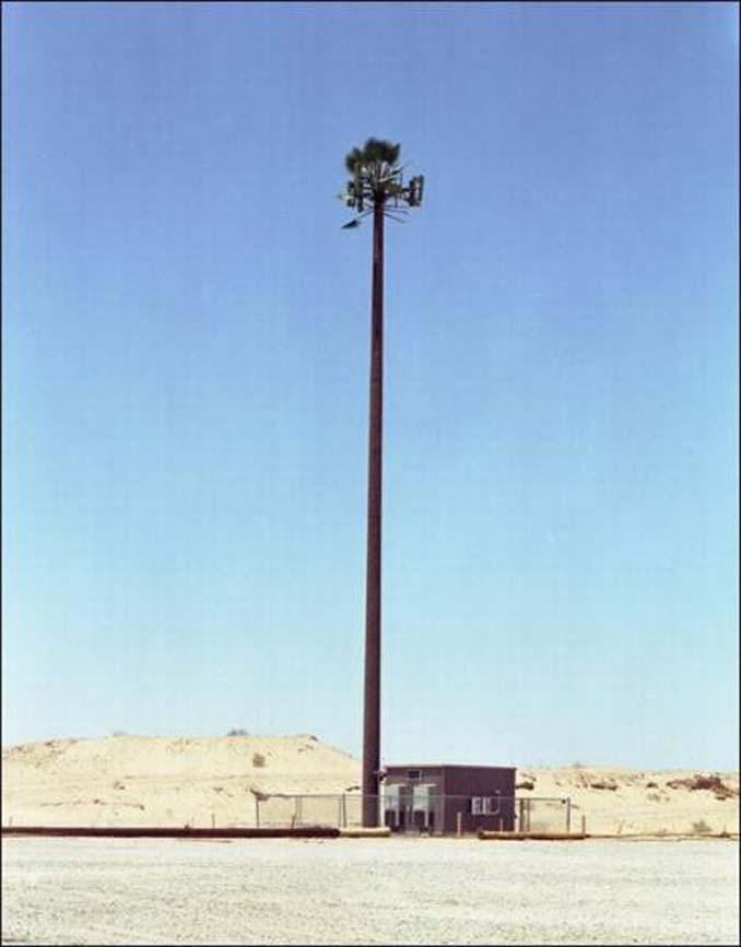 Νομίζετε πως πρόκειται για ένα δένδρο; Κοιτάξτε πιο προσεκτικά... (11)