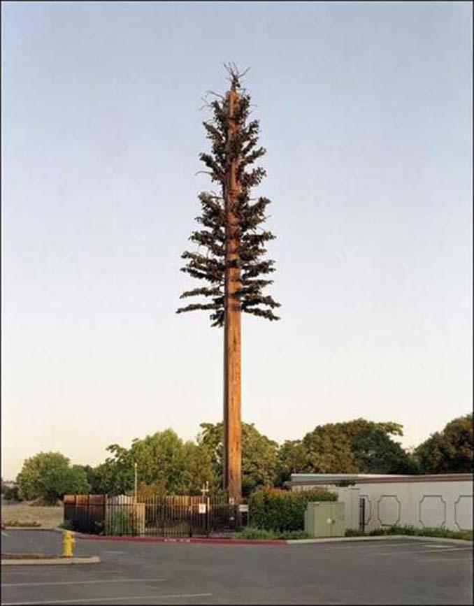 Νομίζετε πως πρόκειται για ένα δένδρο; Κοιτάξτε πιο προσεκτικά... (14)