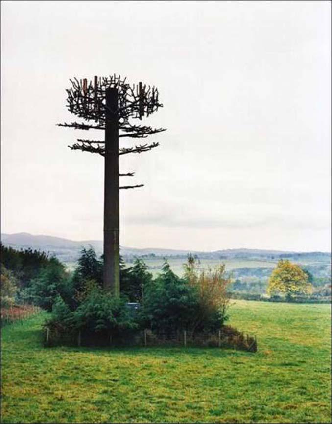 Νομίζετε πως πρόκειται για ένα δένδρο; Κοιτάξτε πιο προσεκτικά... (16)