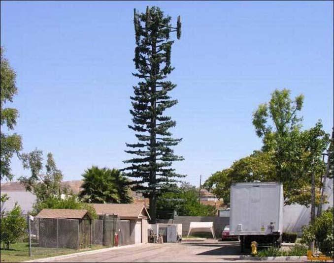 Νομίζετε πως πρόκειται για ένα δένδρο; Κοιτάξτε πιο προσεκτικά... (17)