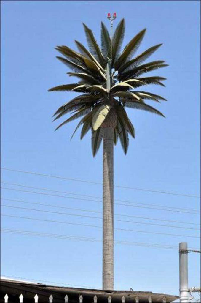 Νομίζετε πως πρόκειται για ένα δένδρο; Κοιτάξτε πιο προσεκτικά... (18)