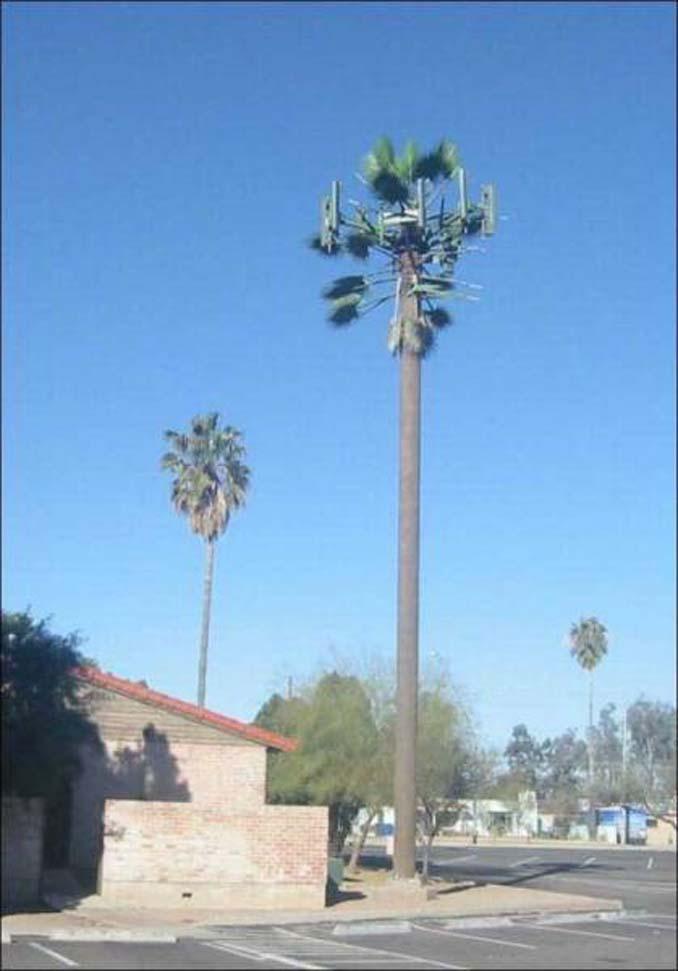 Νομίζετε πως πρόκειται για ένα δένδρο; Κοιτάξτε πιο προσεκτικά... (20)
