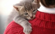 Όταν οι γάτες θέλουν χάδια και αγκαλιές