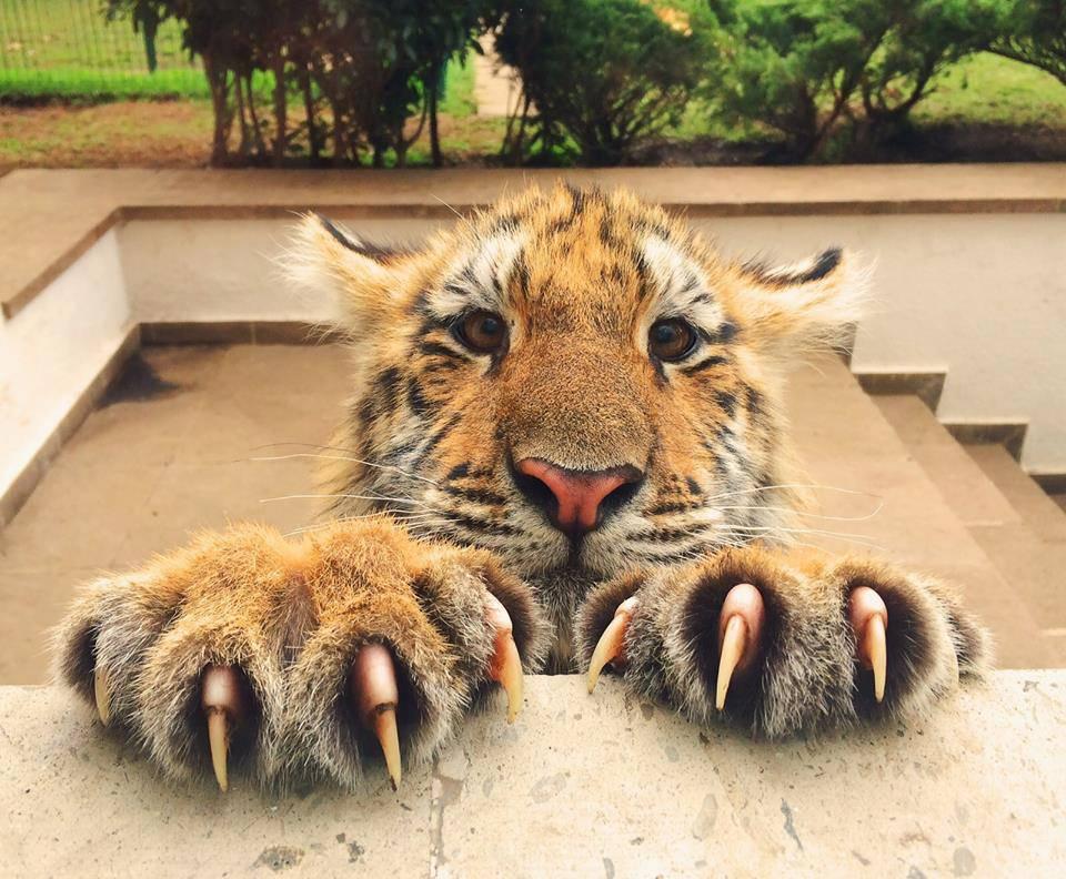 Κι εσύ φοβάσαι τα νύχια της γάτας σου... | Φωτογραφία της ημέρας