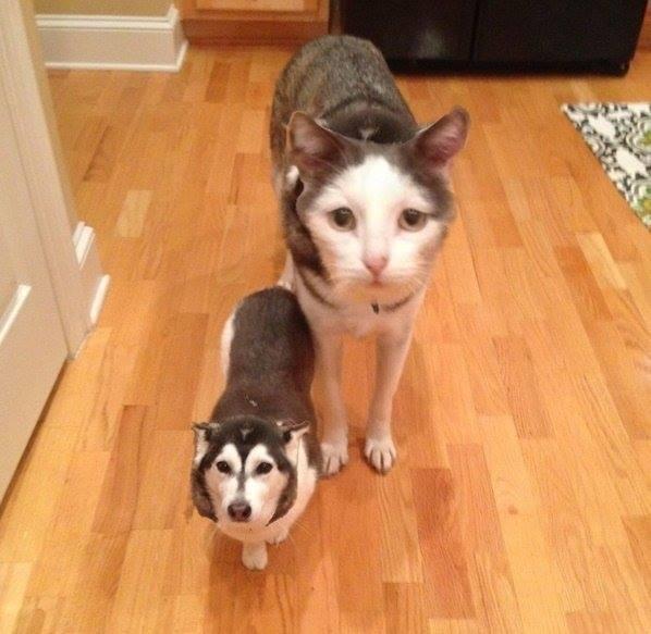Ο σκύλος και η γάτα μέσα από την εφαρμογή Face Swap Live | Φωτογραφία της ημέρας