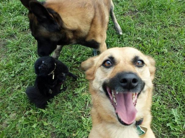 Σκύλοι που βγάζουν απίθανες selfies (4)