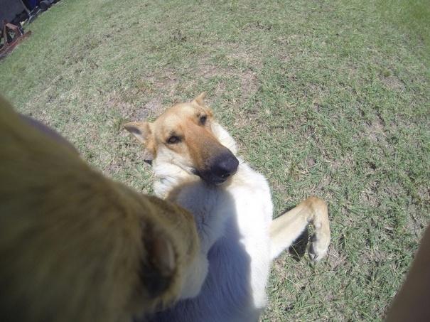 Σκύλοι που βγάζουν απίθανες selfies (7)