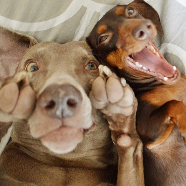 Σκύλοι που βγάζουν απίθανες selfies (12)