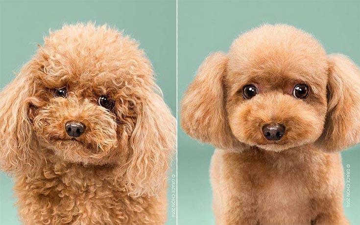 Σκύλοι πριν και μετά το κούρεμα