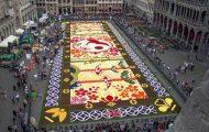 600.000 λουλούδια συνέθεσαν ένα πολύχρωμο «χαλί» 1.800 τετραγωνικών μέτρων στις Βρυξέλλες (1)