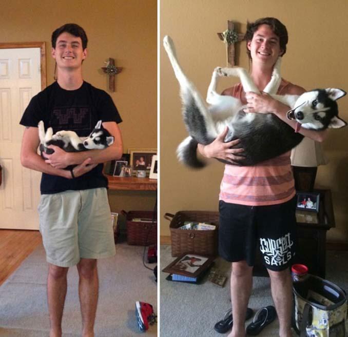 Είναι αδύνατον να μην θες έναν σκύλο βλέποντας αυτές τις φωτογραφίες (3)