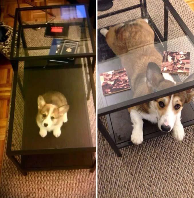 Είναι αδύνατον να μην θες έναν σκύλο βλέποντας αυτές τις φωτογραφίες (4)