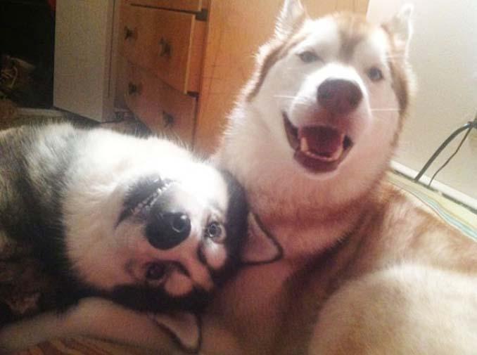 Είναι αδύνατον να μην θες έναν σκύλο βλέποντας αυτές τις φωτογραφίες (7)