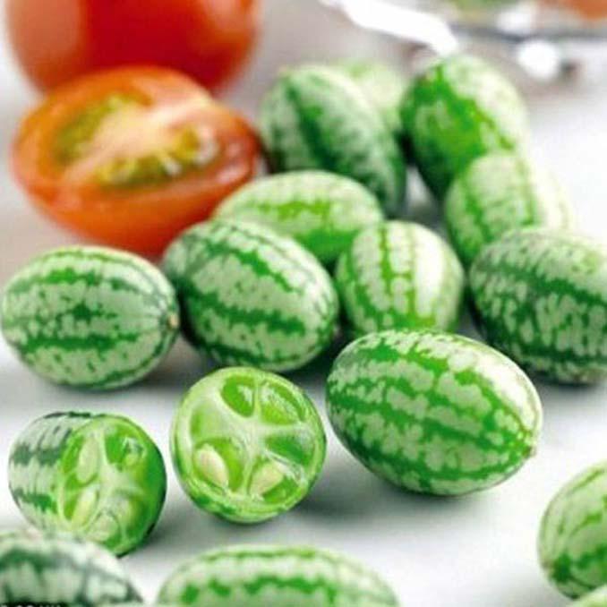 Cucamelon: Αγγούρι σε μέγεθος σταφυλιού που μοιάζει με καρπούζι (3)