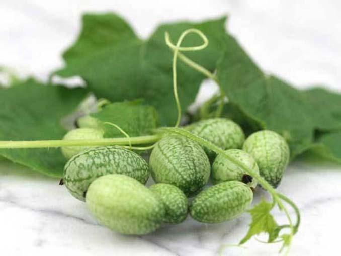 Cucamelon: Αγγούρι σε μέγεθος σταφυλιού που μοιάζει με καρπούζι (5)