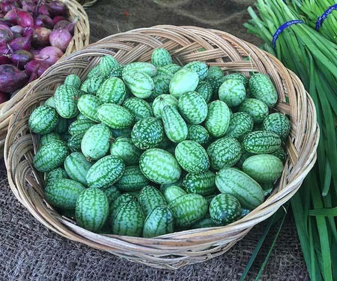 Cucamelon: Αγγούρι σε μέγεθος σταφυλιού που μοιάζει με καρπούζι (6)