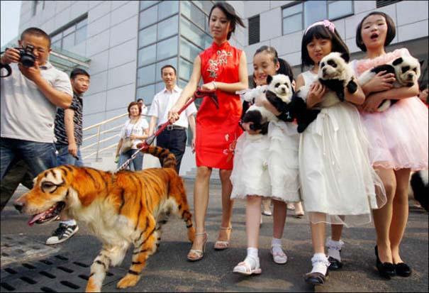 Εν τω μεταξύ, στην Κίνα... #6 (10)