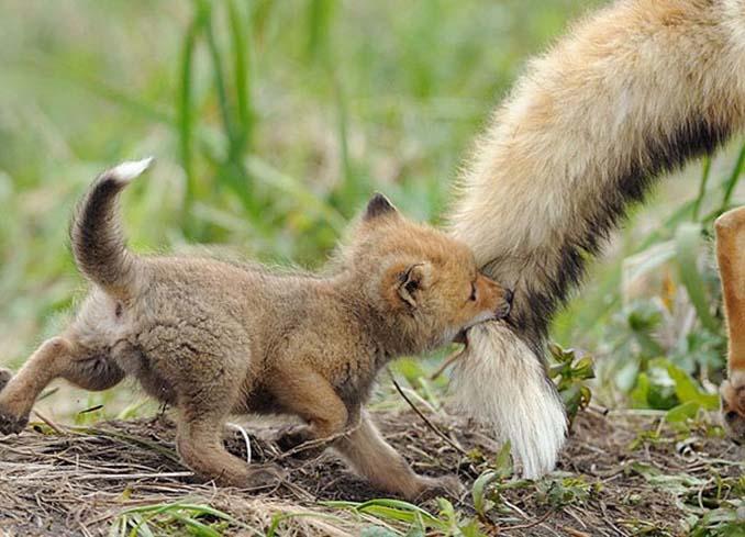 20 φωτογραφίες μωρών ζώων που θα σας κάνουν να λιώσετε (9)