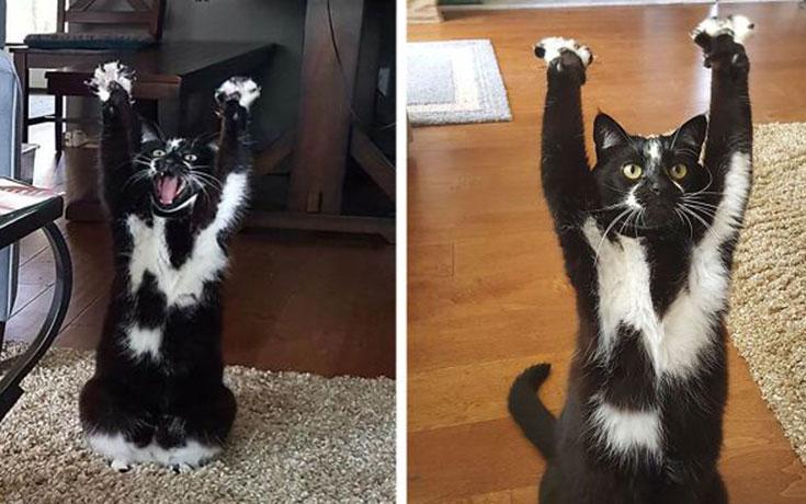 Γάτα με περίεργη συνήθεια (1)