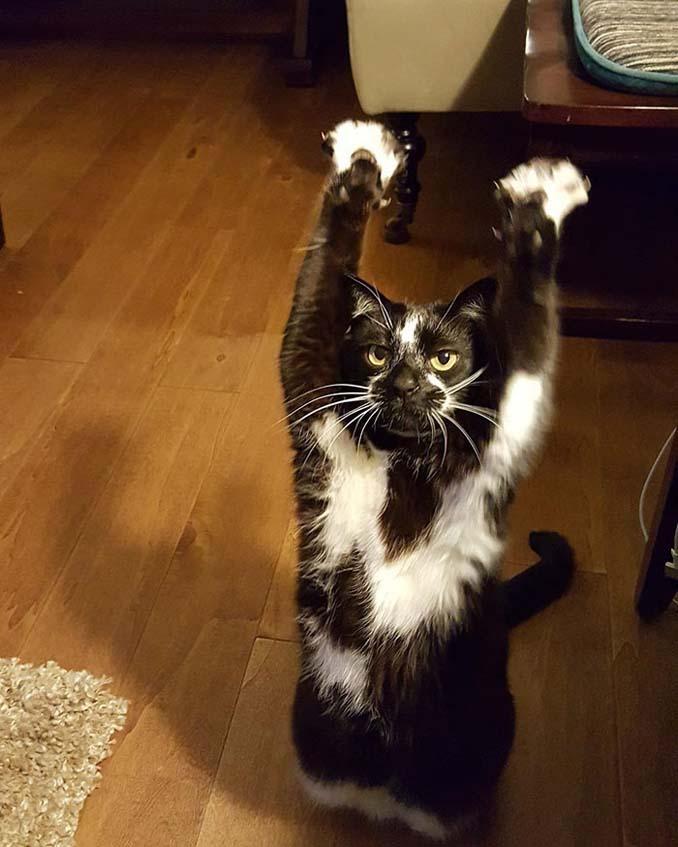 Γάτα με περίεργη συνήθεια (4)