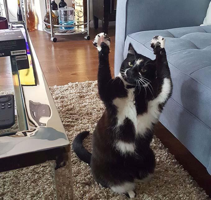 Γάτα με περίεργη συνήθεια (5)