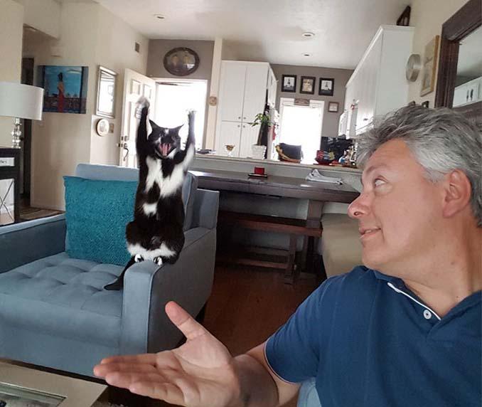 Γάτα με περίεργη συνήθεια (6)