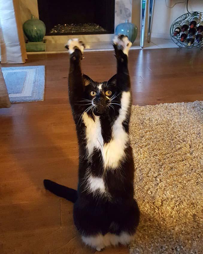 Γάτα με περίεργη συνήθεια (7)