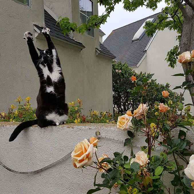Γάτα με περίεργη συνήθεια (8)