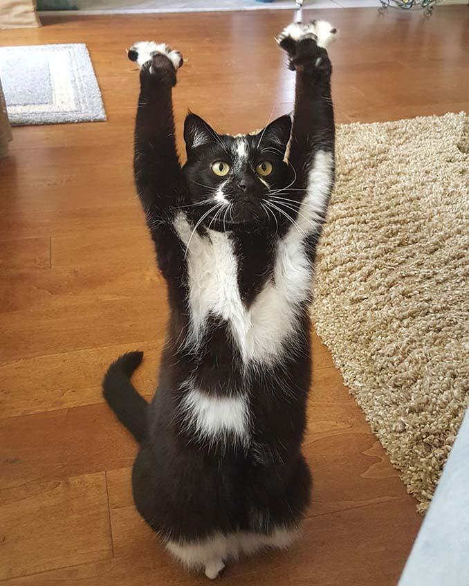 Γάτα με περίεργη συνήθεια (11)