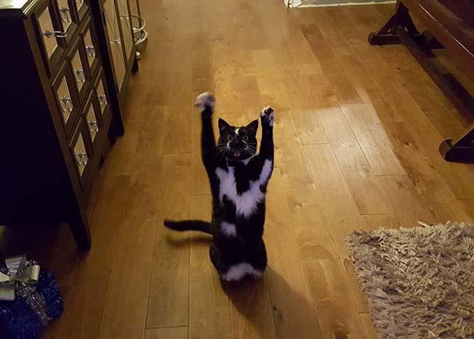 Γάτα με περίεργη συνήθεια (12)