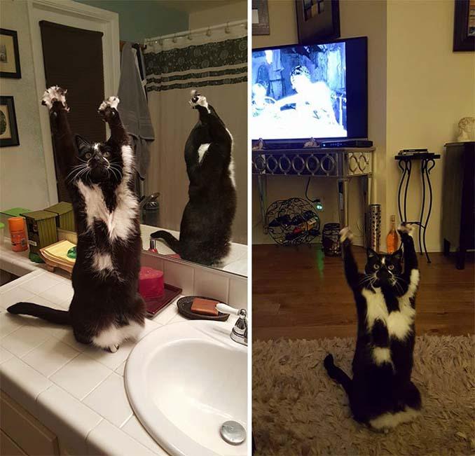 Γάτα με περίεργη συνήθεια (13)