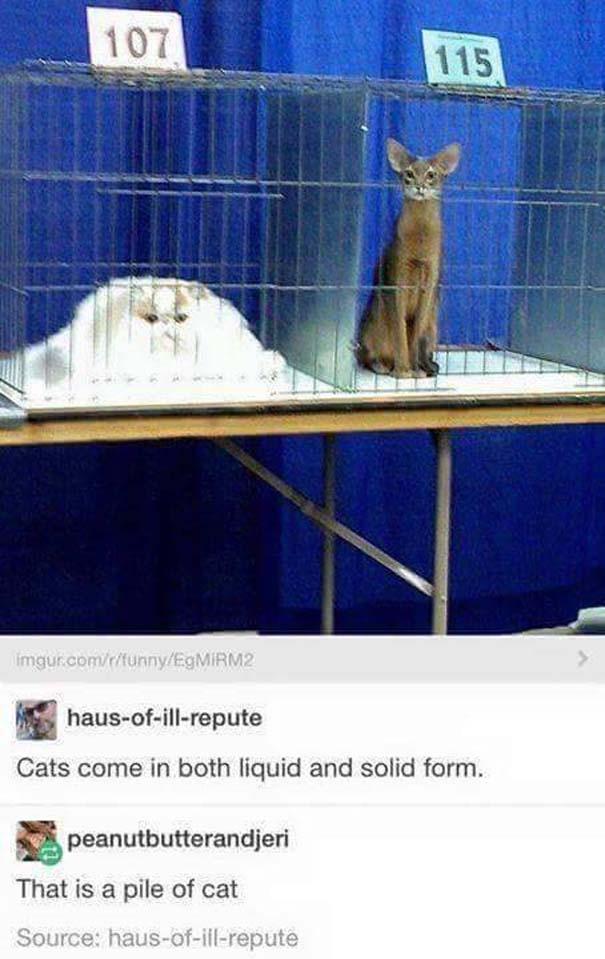 Γάτες που... κάνουν τα δικά τους! #31 (4)