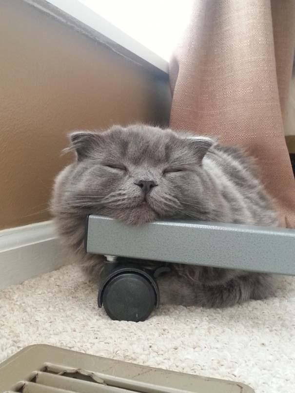 Γάτες που... κάνουν τα δικά τους! #31 (6)