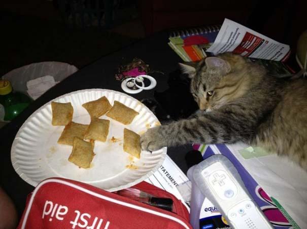 Γάτες που... κάνουν τα δικά τους! #31 (7)